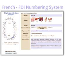 Tooth Meridian Chart French Tooth Chart Fdi Numbering System Interactive