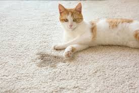 the 25 best cat urine odor removers of