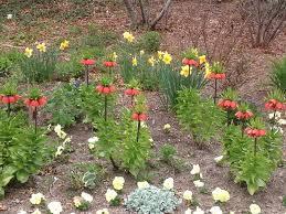 spring bulbs reduced