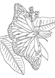 Vlinders Kleurplaten