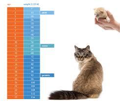 40 Prototypic Kitten Weight Chart 14 Weeks