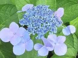 「夏の花」の画像検索結果
