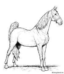 Kleurplaten En Zo Kleurplaten Van Paarden Beste Kleurplaten Nl20