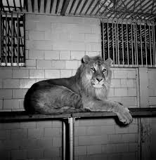 Image result for images bronx zoo cages 50s