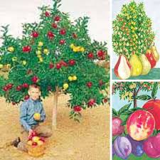 Creating A Garden For Fruit Eating Birds This Bird DayMedley Fruit Tree