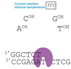 Polymerase Chain Reaction Online Course Gtac