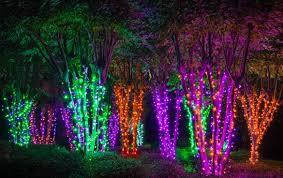 christmas lighting decorations. Light Wrapped Trees For Halloween Christmas Lighting Decorations