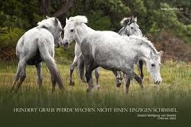 Rossfoto Dana Krimmling Pferdefotografie Kluge Sprüche Und