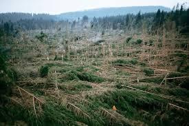 """La certification du bois des forêts: """"FSC"""" , """"SFI"""" , """"PEFC"""""""