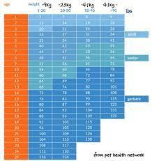 犬 年齢 計算
