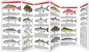 Saltwater Fish Chart Saltwater Game Fish Of North America A Pocket Naturalist Guide