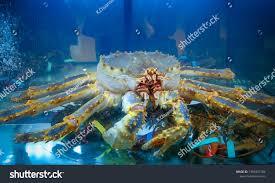 Big Alaskan Crab King Crab Underwater ...
