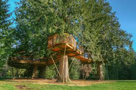 tree house pictures. \ Tree House Pictures