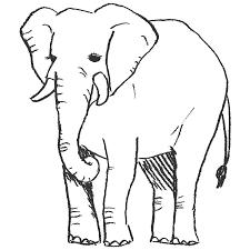 象の全身イラストpng えんぴつ素材