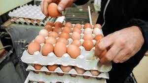 many eggs ile ilgili görsel sonucu