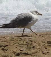 El Tiempo En Las Playa De Playa Del FortiQue Hacer En Vinaroz