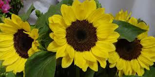 Termesztésben ígéretes nyári vágott-virágok (1) - Virágos hírek