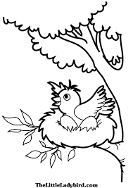 Small Picture Top 85 Nest Coloring Pages Free Coloring Page