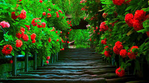 spring red flowers along path free hd wallpapers