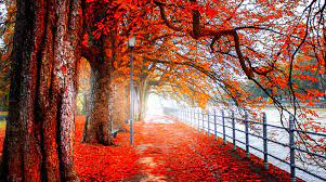 Red Nature 4K HD Wallpapers (Page 5 ...