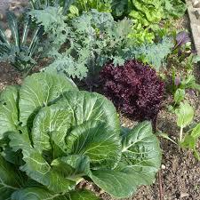 Small Picture Desert Gardening Ideas for Your First Veggie Garden