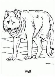 Cartoon Walrus Coloring Page 1 Animal Patterns Coloring Pages