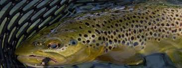 Fly Fishing On The Weber River In Utah