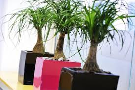 Great office plants Indoor Plants Great Looking Office Plants In Black And Pink Pots From Nature At Work Eduardoluruenainfo Nature At Work Office Plant Rental Living Wall Systems