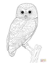 Northern Spotted Owl Coloring Page Free