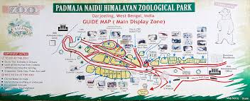 a guide map of the padmaja naidu himalayan zoological park
