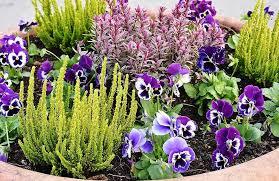 planting flowers stiefmütt cher chen