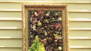 on live succulent wall art with creating living wall art youtube
