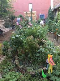 61 franklin street munity garden photo by lucie levine