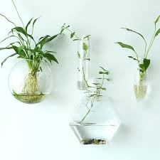 wall mounted vases diffe shapes glass materials transpa interior hanging vases wall mounted aquatic terrariums wall wall mounted vases