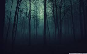 Dark Forest Wallpapers HD - Wallpaper Cave