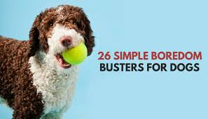 26 quick simple ways to relieve dog boredom