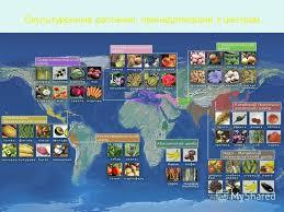 Презентация на тему Центры происхождения культурных растений по  5 Окультуренные растения принадлежащие к центрам