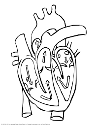 Small Picture Coloring Heart Anatomy Coloring Pages