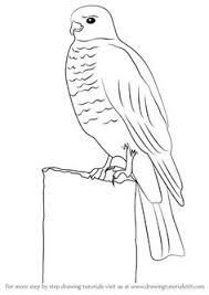 learn how to draw a buzzard birds step by step drawing tutorials