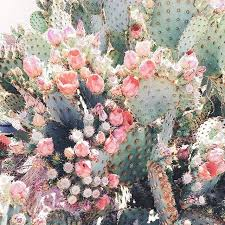 Small Picture Best 10 Prickly pear cactus ideas on Pinterest Desert flowers