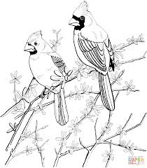 Northern Cardinal Coloring Pages Supercoloringcom Gourds