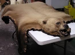 blonde black bear rug