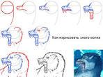 Как нарисовать волка поэтапный рисунок