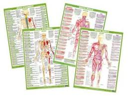 Details About Muscle Anatomy Poster Anterior Skeletal Muscle Chart Gym Exercise Fitness Poster