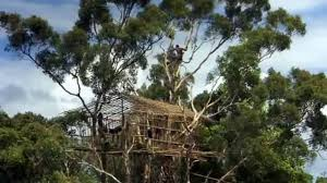 Group Of Papuan Korowai Tribe In The House On A Tree In The House Korowai Treehouse