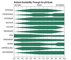 What Does Ph Stand For And How To Monitor Ph Levels In