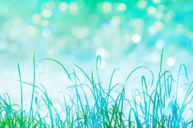 tall grass silhouette. Wonderful Tall Tall Grass In Green Silhouette With Sparkling Bokeh Light Effects Stock  Photo Picture And Royalty Free Image Image 67431612 To