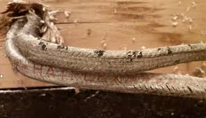old cloth covered electrical wire. Perfect Cloth Enter Image Description Here  On Old Cloth Covered Electrical Wire A