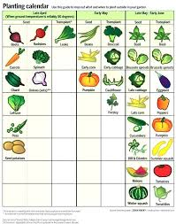 south florida vegetable gardening guide farmers markets