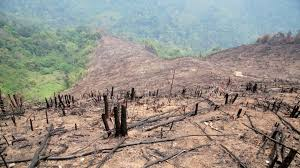 of deforestation essay hazards of deforestation essay